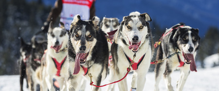 mushing: View of sled dog race on snow in France