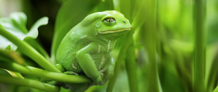 view of Monkey Tree Frog
