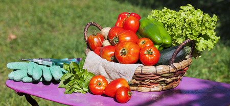 sell: Vegetables in a basket under sunlight Stock Photo