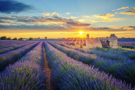 French lavender field at sunset. Archivio Fotografico