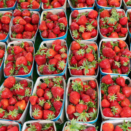 strawberry on french market