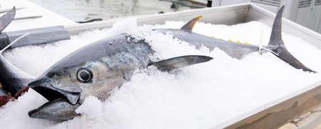 tuna in ice on market