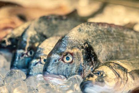 fresh file on ice in a market, Greece 免版税图像