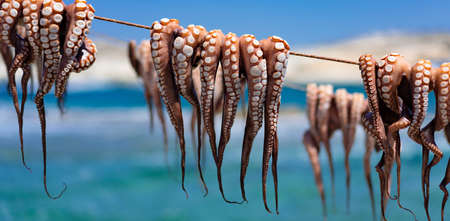 octopus drying out after fishing, Milos, Greece