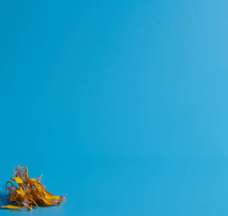 a bunch of dry yellow petals lies on a blue background
