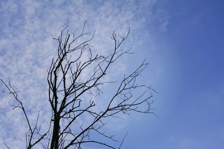 A withered dead tree without leaves against a blue sky