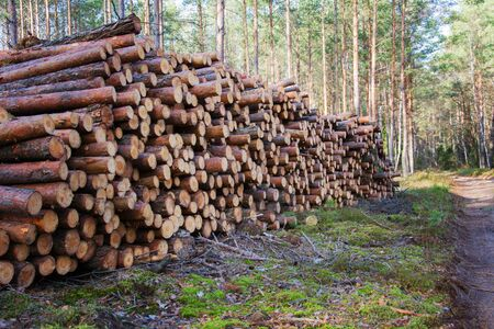Natural wooden logs cut and stacked in pile, felled by the logging timber industry. Pile of felled pine trees in the forest background. Commercial woodland tree cutting and felling operations.