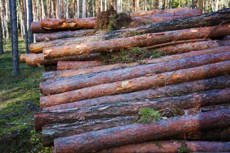 Environment, nature and deforestation forest - felling trees in woods. The cut tree trunks are stacked and ready for transportation to the woodworking plant for processing. Фото со стока