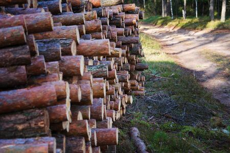 The road through the felling felled trees. Large-scale felling. Freshy cut and ready for transportation pine trunks. Forestry industry Stock Photo
