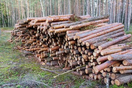 Natural wooden logs cut and stacked in pile, felled by the logging timber industry. Trunks of felled trees are prepared for transportation on a timber truck. Commercial woodland tree cutting and felling operations.
