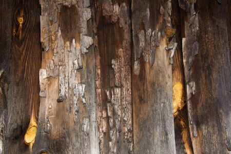 Tree Texture with bark. Background of tree bark, wooden background for web page fill or graphic design. Zdjęcie Seryjne