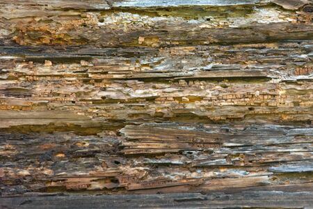 Texture of old stratified and rotten wood, abstract background. Old Weathered Rotten Cracked Knotted Coarse Wood Vignetted Grunge Texture.