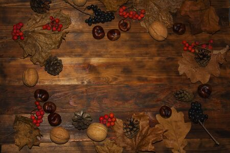 Festive autumn decor of Rowan berries, elder, chestnut fruit, walnut, pine and yellow leaves on a dark wooden background. Concept of Thanksgiving or Halloween. Composition, frame with copyspace