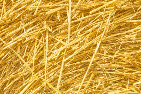Yellow hay straw background texture with copyspace. Natural vintage style for design