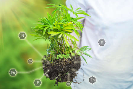 Woman holds in hand seedling grown plant with help of fertilization and nutrients necessary for plant growth. Cultivate plants with digital mineral nutrients icon. Concept of farming on loamy soils.
