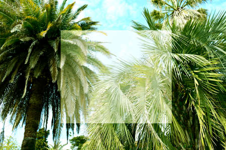 Tropical palm tree with sky and cloud abstract background. Copyspace for text. Summer vacation and nature travel adventure concept