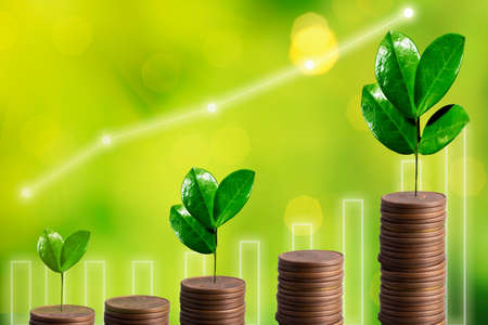 Growing Money. Plant On Coins stack. Financial Business concept, investment budget and financial growth Фото со стока