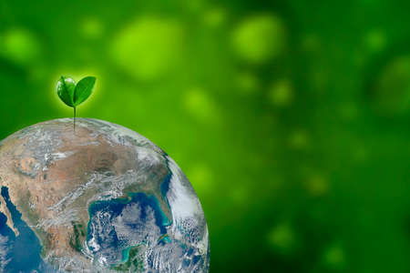 Planting tree, world in grass of green bokeh background. Day earth green planet concept.