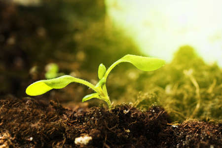 Small tree growing with sunrise. Concept of plant growth, new life growth ecology business financial progress.