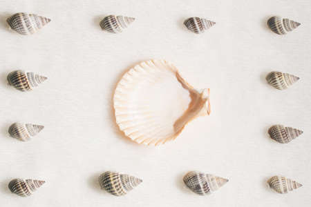 Summer composition with different seashells on beige beach sand background. Difference, individuality, leadership and uniqueness concept