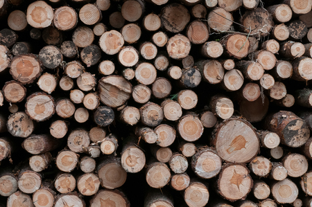 deforested: Stacked logs