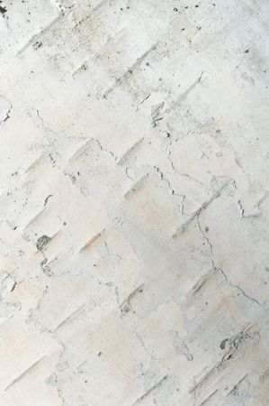 Close up of birch bark surface texture photo