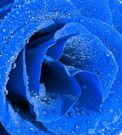 Rose  background photo