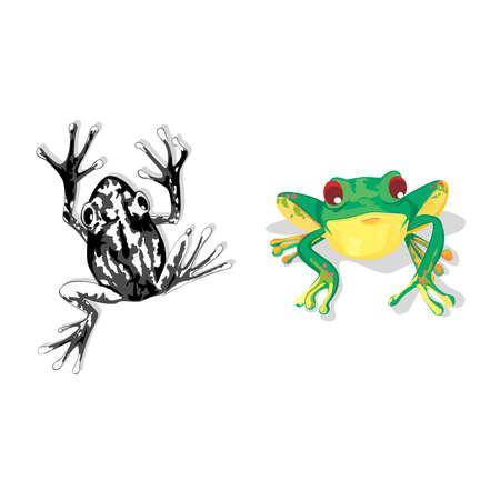 clasificacion: ranas
