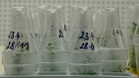 Research scientist medical plants capsicum and red pepper for medicinal purposes, bottles tube test growth chamber in vitro clone culture, laboratory genetic phytotron cloned, cultivation growth science, nutrient agar, sterile box agar, biotechnology, excellent bio professional technology work greenhouse rootlab tissue, Europe