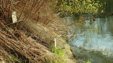 Trap cage on european beaver in bushes on river bank. illegal law hunting removal hunter. Camouflaged in the bushes of plants and shrubs. Hunting and catching bait empty. Traps hidden are used to catch pests box. Czech Republic, Europe, European Union