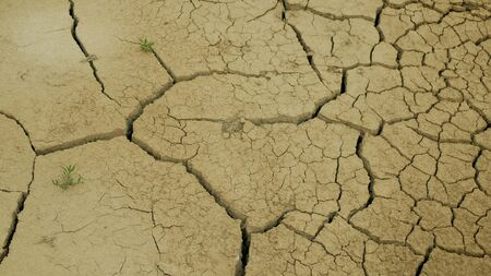Very drought wetland, swamp and pond drying up the soil cracked crust earth climate change, environmental disaster and earth cracks very, death for plants and animals, soil dry degradation Standard-Bild