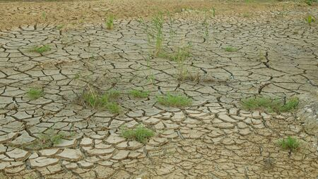 Drought cracked pond wetland, swamp very drying up the soil crust earth climate change, environmental disaster and earth cracks very, death for plants and animals, soil dry degradation Standard-Bild
