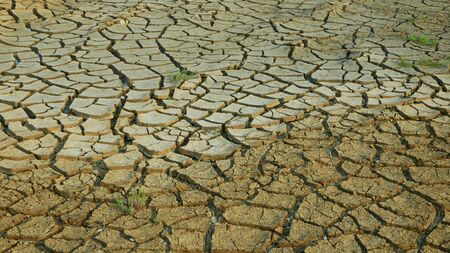 Drought cracked pond wetland, swamp drying up soil crust earth climate change, surface extreme heat wave caused crisis, environmental disaster cracks very, green plant death dry degradation marsh Stock Photo