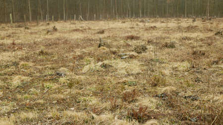 Stump planted planting oak growing newly new trees young seedling sapling making way wood larva, clear cut calamity wood, opening part hole floodplain forest wood plants, folded stem fence fencing