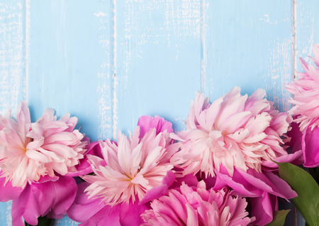 magenta decor: Pretty pink peonies on blue colored wooden background, top view