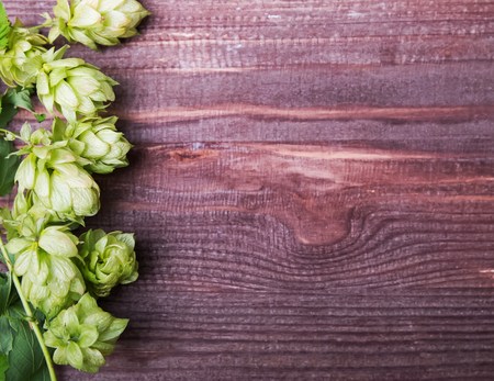 flower leaf: Hop cones n the wooden background, top view