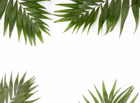 Green palm leaves on the white background, top view