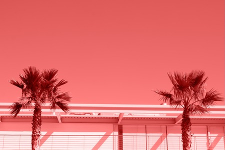 Two palms in a minimalist urban landscape toned in living coral color Reklamní fotografie