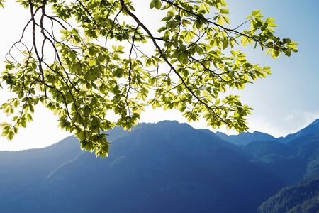 Branch with green leaves on the background of the mountains.