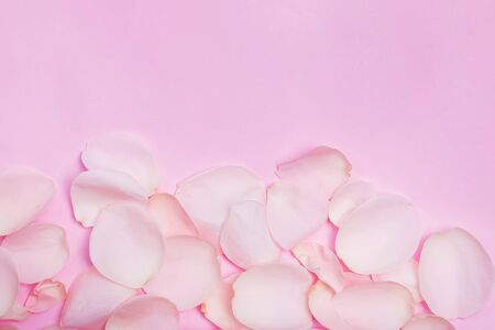 Rose petals on pink background with copy space Standard-Bild - 134851642