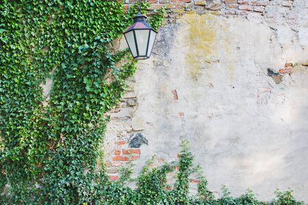Old stone cracked wall with green ivy plant