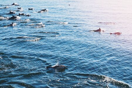 A group dolphins leap out of the water Archivio Fotografico