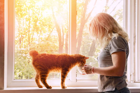 Lovely curious ginger cat on the window sill drinking from the womans cup. Stock Photo