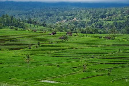 Rice terraces of Bali Island, Jatiluwih, Indonesia