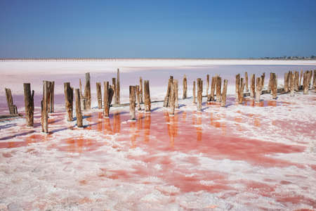 Old wooden planks stick out from the pink salt lake
