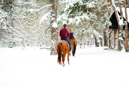 Rear view of a two riders on the chestnut brown horses, walking through the snowy pine forest