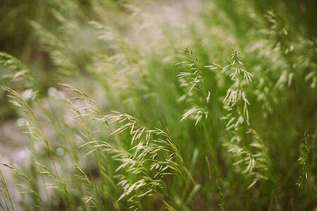 Green meadow grass. Close-Up. Summer, soft sunlight. Standard-Bild
