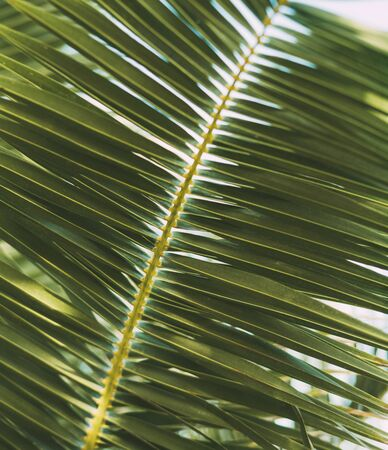Close-up of leaves of palm tree branch against the sky. Texture and background