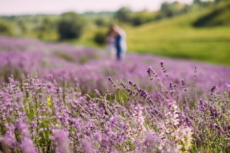 closeup lavender flower on a field next to green hills. A couple standing in the background out of focus blurred hugs. Aromatherapy Lavender Paradise. Sunny day. Provence.