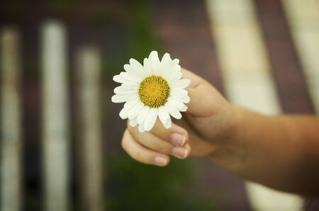 Small white flower in the child hand close up